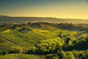 Paysage panoramique de vignobles de la région du Chianti en Italie